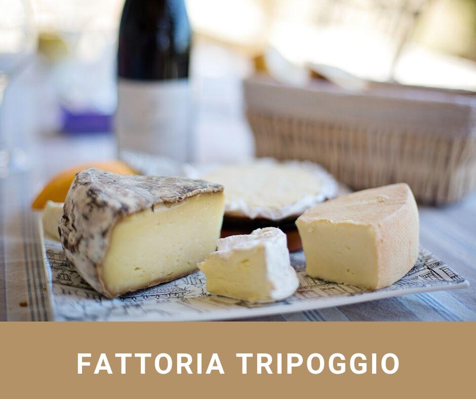 fattoria_tripoggio